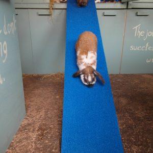 Pawsonit bunny ramp