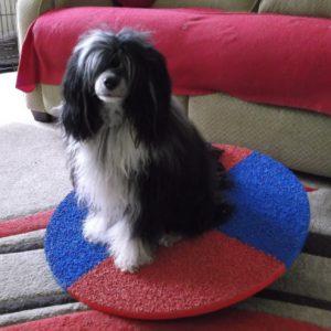 Evie & Ellery's wobbleboard