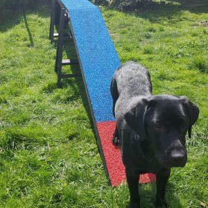 Kero's Dog Walk