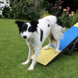 Thank you so much for our seesaw! It is really good quality and just what we needed for Rue's confidence and contacts!