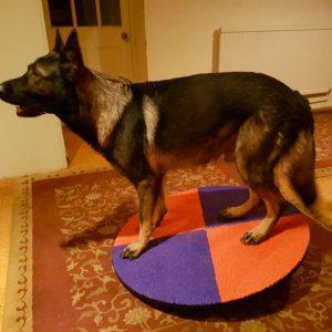 Ryker's wobble board