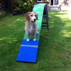 Tetley on his new dog walk