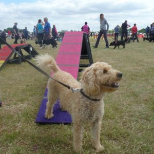 Testing out our dog walk at the Axstane Show