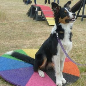 Drift trying out our multi coloured wobble board