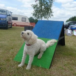 Phoebe trying out a Pawsonit a-frame
