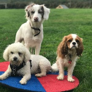 Beautifully modelled by Pearl, Buddy & Alfie